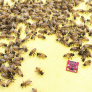 """Nathan's """"Internet of Bees"""" project"""