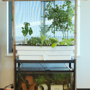 Enginursday: Aquaponics in Bloom