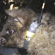 Tracking Possums with RFID