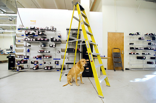 Mike in Production's dog Lucky leveraging his namesake to throw caution to the wind