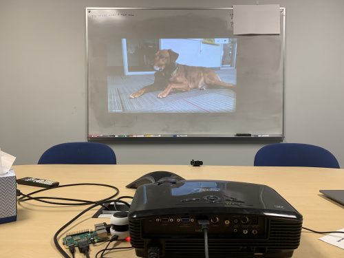 Video calling my dog from the conference room.