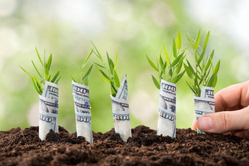 Hundred dollar bills wrapped around five seedlings in the ground